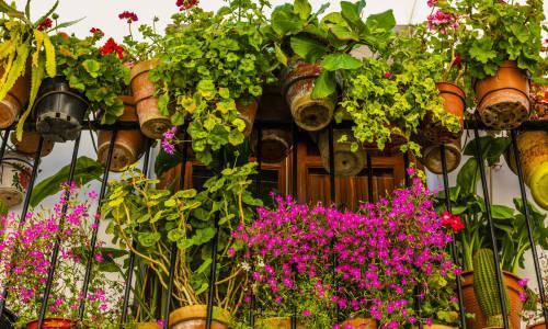Kwiaty i rośliny najlepsze na balkon
