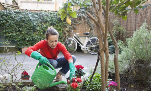 Ogród: co i kiedy sadzić?